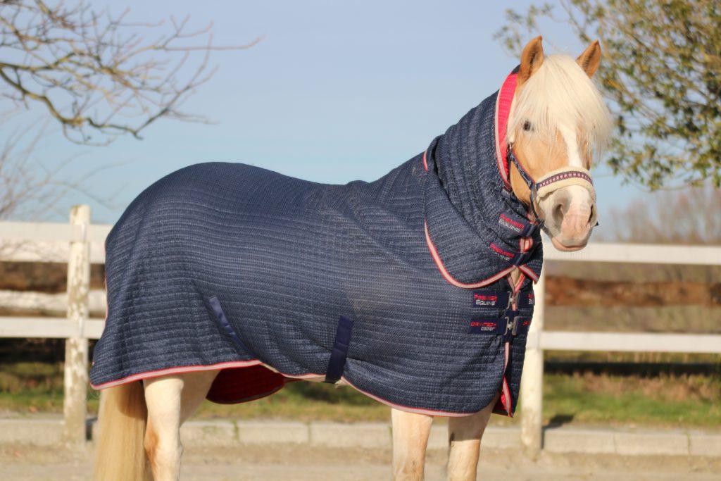 Wie trockne ich mein Pferd nach dem Reiten?
